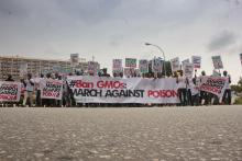 March against Poison: Nigerians say no to GMOs and seek a repeal of the Biosafety Law