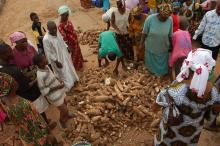 Ibadan Organic Farmers Market launched in Nigeria