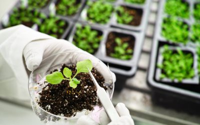 Agricultural Biotechnology will not ensure food security
