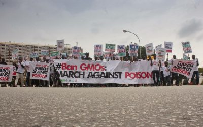 Court Decides on GMO Case: HOMEF and CSOs Pledge to Fight on!